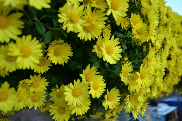 Smithsonian Flowers (2)
